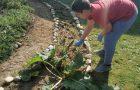 Naravoslovni dan: Priprava vrtička na jesen / Természetismereti nap: A kert felkészítése az őszre
